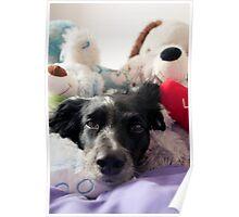 Dog toys Poster