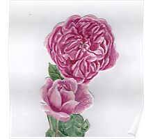 A rose and a rose Poster