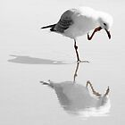 Seagull Reflections by JCMPhotos