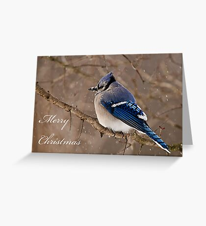 Christmas Card - Blue Jay 2 Greeting Card