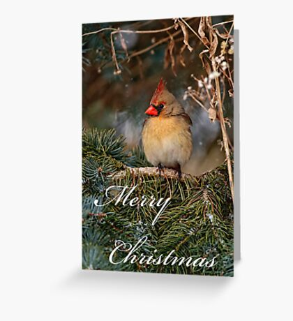 Christmas Card - Female Cardinal Greeting Card