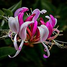 Wild Honeysuckle by Charles &amp; Patricia   Harkins ~ Picture Oregon