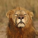 This is my Territory! by jozi1