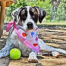 Mollie-Relaxing at the Dog Park by ruffeduprescue