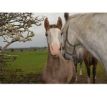 Horses, Photographic Print