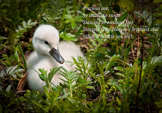 Baby Card - Mute Swan by Michael Cummings