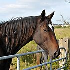 Horse over Gate, by JoeTravers