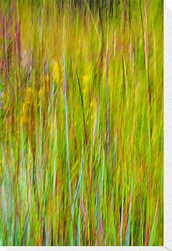 End of Summer Kitty Todd Nature Preserve An Abstract Expressionism by Mitch Labuda