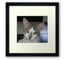 Who...Me? Framed Print