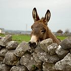 Donkey over the Wall, Ireland by JoeTravers