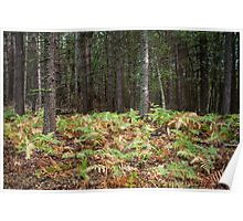 Trees and ferns in the woods Poster