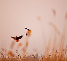 Dancing in the sky by THHoang