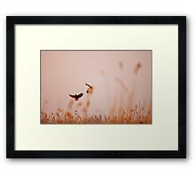 Dancing in the sky Framed Print