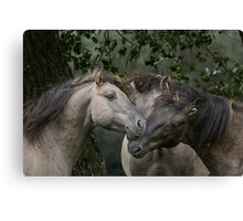 On The Count of Three... Canvas Print