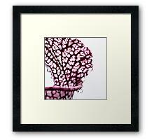 Sarracenia Pitcher  Framed Print