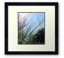 18/365 Framed Print