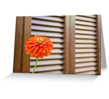 RED FLOWER WOODEN SHUTTERS Greeting Card