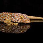 Tokay Gecko by Brian Avery