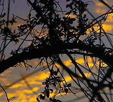 Sunrise Through The Branches by Heather Friedman