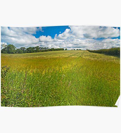 Landscape, ripening field of barley, Brydekirk, Scotland Poster
