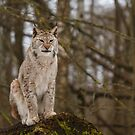 A Proud Predator by Irina777