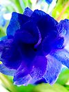 Brilliant Blue Flower  by Marcia Rubin