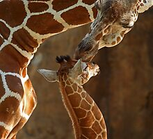 """""""Mother's Kiss"""" by tracilaw"""