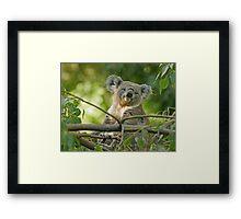 Smug Koala Framed Print