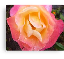 Bubblegum Coloured Rose Canvas Print