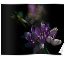 Purple and White flower II Poster