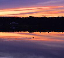 Sunset Swim by Justin Cox