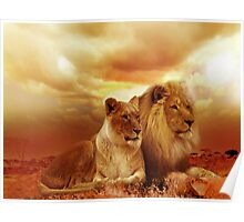 Lions At Sunset Poster