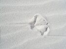 Seagull Footprint in the Sand by MotherNature