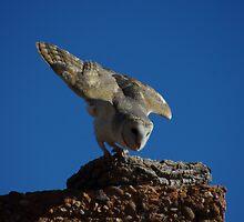 Fly away Owl by Linda Fury