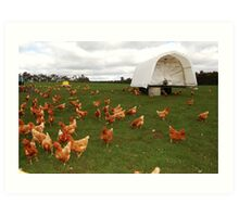 Happy Chickens (the life that all chickens deserve to live) Art Print