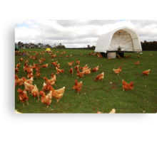 Happy Chickens (the life that all chickens deserve to live) Canvas Print