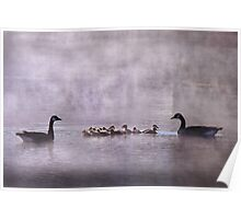 Family of Geese Poster