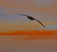 Bird in Sunset by Justin Cox