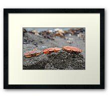 Crab Heads Framed Print