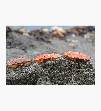 Crab Heads Photographic Print