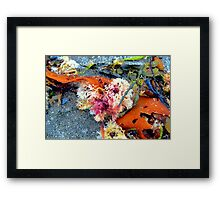 Sea Plants Framed Print