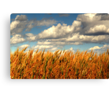 Prairie Gold!!! Canvas Print