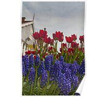 Holland Tulip Festival Poster