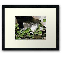 Alder at bear Creek Framed Print
