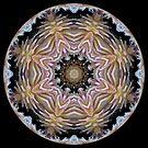 Dazzling Dahlias ball 2 by Matthew Sims