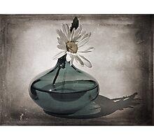 Daisy in a Aqua vase Photographic Print