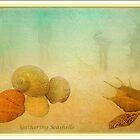 Gathering Shells by margo