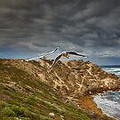 Gulls In Flight - Cape Mentelle WA by Chris Paddick