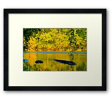 HDR - River and Logs Framed Print