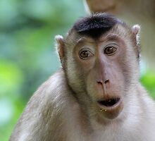 Long-tailed Macaque 2 by MrMarth
